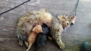кошка с тапками